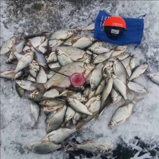 FishHunteri saaginäide